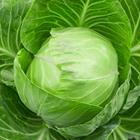 Answer Cabbage