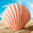 Answer Seashell