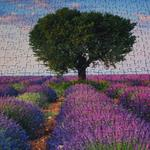 Answer Lavender,puzzle