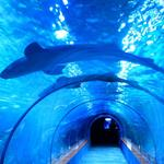 Answer shark,tunnel
