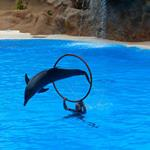 Answer dolphin,hoop