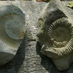 Answer Ammonites,fossil