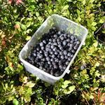 Answer Bilberries,plastic